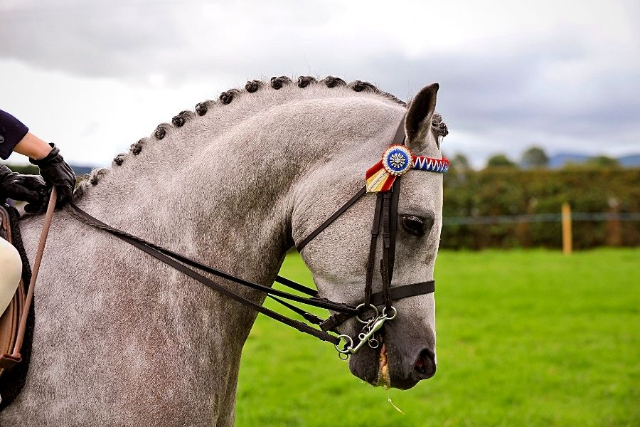 WHY TURNOUT IS IMPORTANT FOR YOUR HORSE (2)